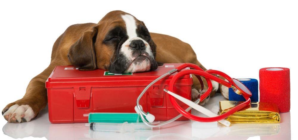 dog_aid_kit