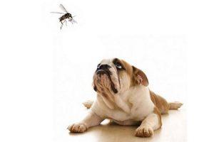 cane-punto-da-insetto