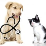 Arriva il caldo consigli per il benessere dei nostri animali